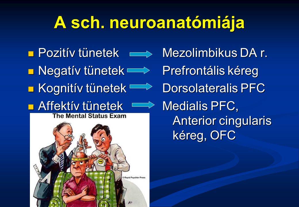 A sch. neuroanatómiája Pozitív tünetek Negatív tünetek