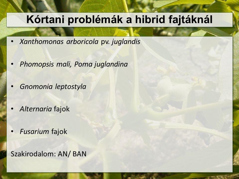 Kórtani problémák a hibrid fajtáknál