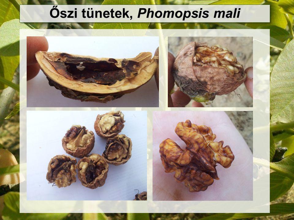 Őszi tünetek, Phomopsis mali