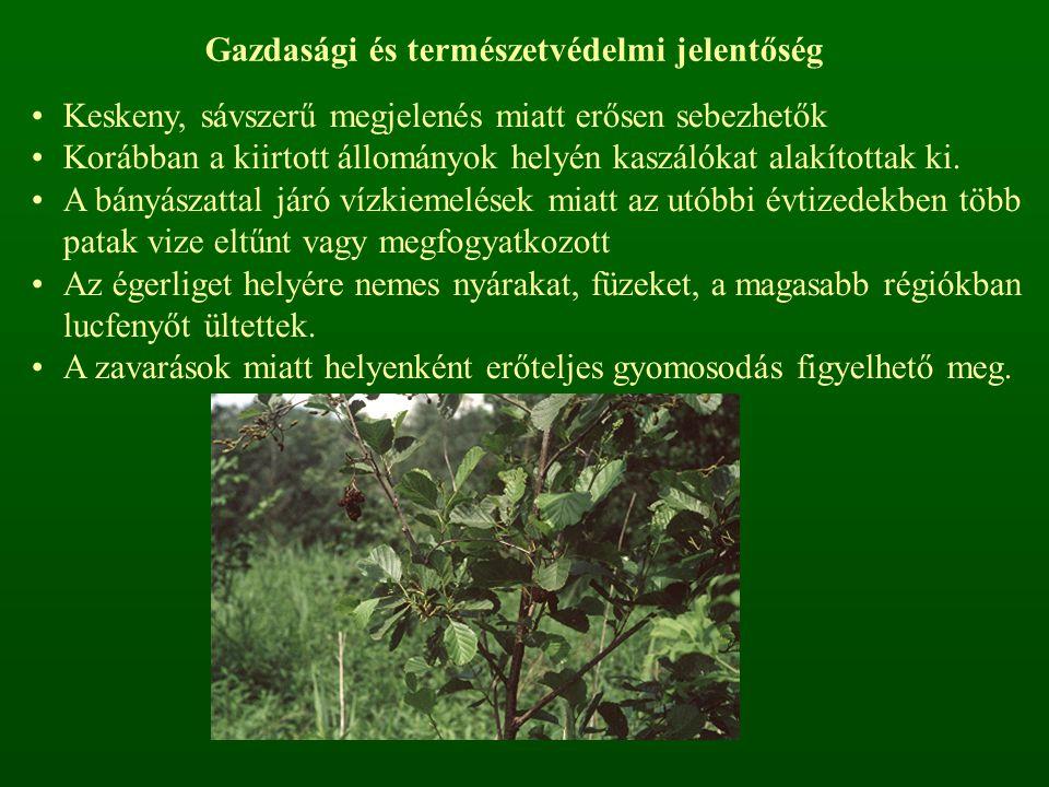 Gazdasági és természetvédelmi jelentőség