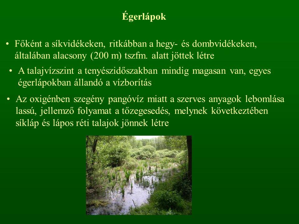 Égerlápok Főként a síkvidékeken, ritkábban a hegy- és dombvidékeken, általában alacsony (200 m) tszfm. alatt jöttek létre.