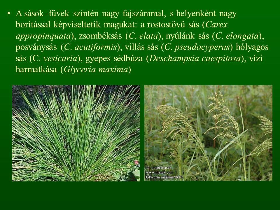 A sások–füvek szintén nagy fajszámmal, s helyenként nagy borítással képviseltetik magukat: a rostostövű sás (Carex appropinquata), zsombéksás (C.