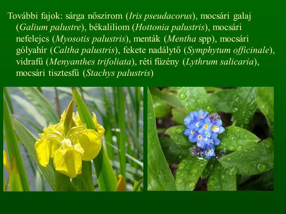 További fajok: sárga nőszirom (Iris pseudacorus), mocsári galaj (Galium palustre), békaliliom (Hottonia palustris), mocsári nefelejcs (Myosotis palustris), menták (Mentha spp), mocsári gólyahír (Caltha palustris), fekete nadálytő (Symphytum officinale), vidrafű (Menyanthes trifoliata), réti füzény (Lythrum salicaria), mocsári tisztesfű (Stachys palustris)