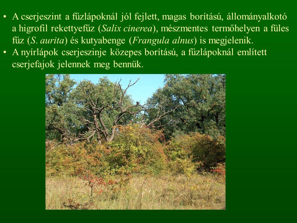 A cserjeszint a fűzlápoknál jól fejlett, magas borítású, állományalkotó a higrofil rekettyefűz (Salix cinerea), mészmentes termőhelyen a füles fűz (S. aurita) és kutyabenge (Frangula alnus) is megjelenik.