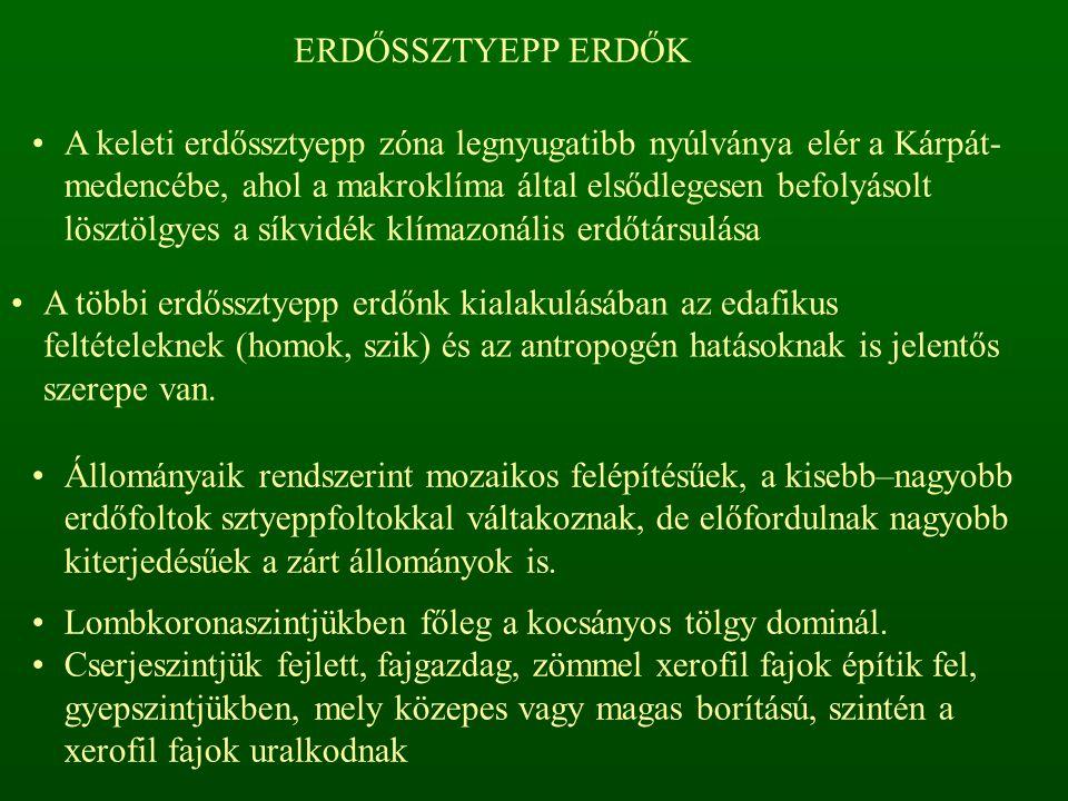 ERDŐSSZTYEPP ERDŐK