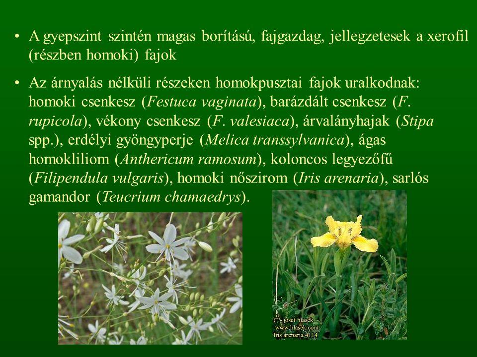 A gyepszint szintén magas borítású, fajgazdag, jellegzetesek a xerofil (részben homoki) fajok