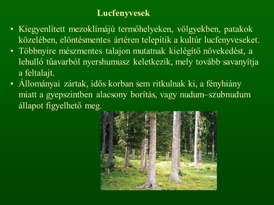 Lucfenyvesek Kiegyenlített mezoklímájú termőhelyeken, völgyekben, patakok közelében, elöntésmentes ártéren telepítik a kultúr lucfenyveseket.