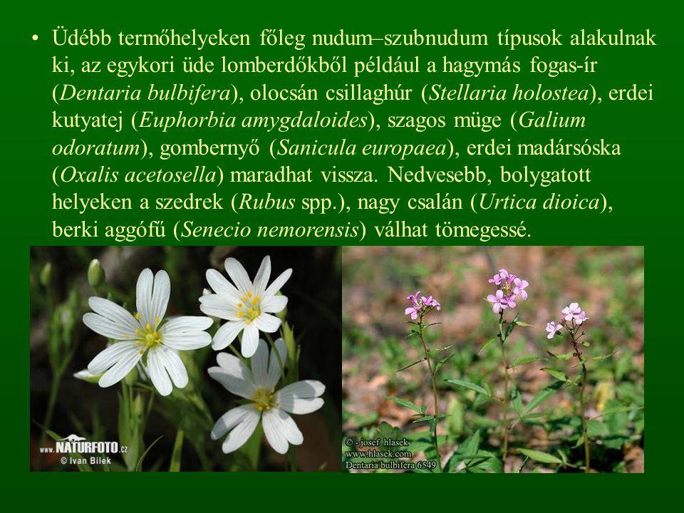 Üdébb termőhelyeken főleg nudum–szubnudum típusok alakulnak ki, az egykori üde lomberdőkből például a hagymás fogas-ír (Dentaria bulbifera), olocsán csillaghúr (Stellaria holostea), erdei kutyatej (Euphorbia amygdaloides), szagos müge (Galium odoratum), gombernyő (Sanicula europaea), erdei madársóska (Oxalis acetosella) maradhat vissza.