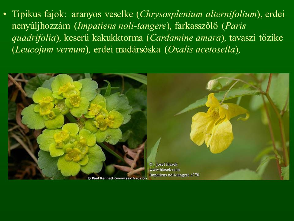 Tipikus fajok: aranyos veselke (Chrysosplenium alternifolium), erdei nenyúljhozzám (Impatiens noli-tangere), farkasszőlő (Paris quadrifolia), keserű kakukktorma (Cardamine amara), tavaszi tőzike (Leucojum vernum), erdei madársóska (Oxalis acetosella),