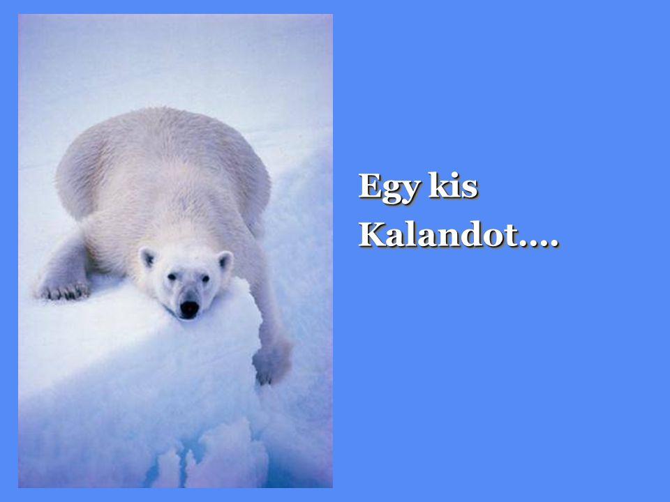 Egy kis Kalandot….