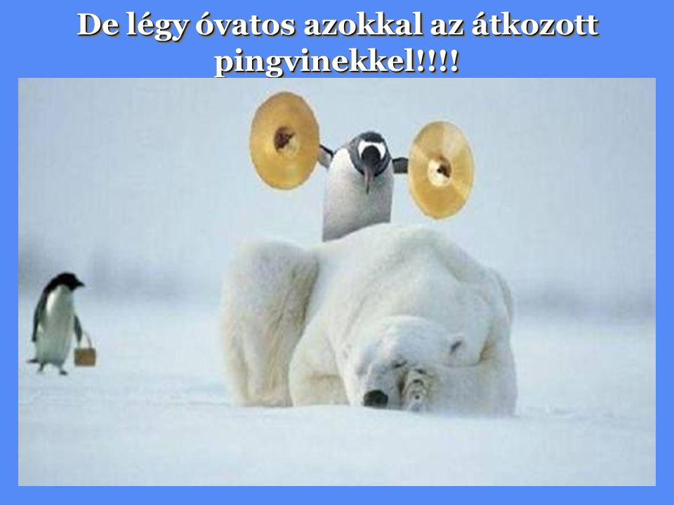 De légy óvatos azokkal az átkozott pingvinekkel!!!!
