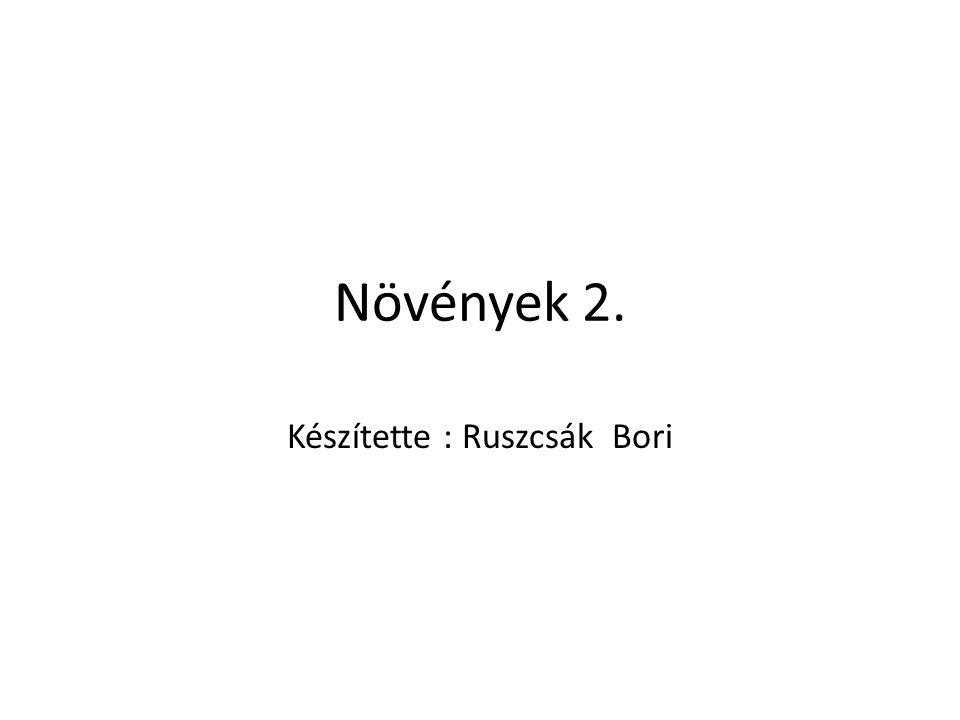 Készítette : Ruszcsák Bori