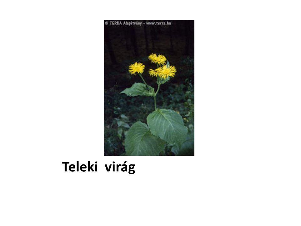 Teleki virág