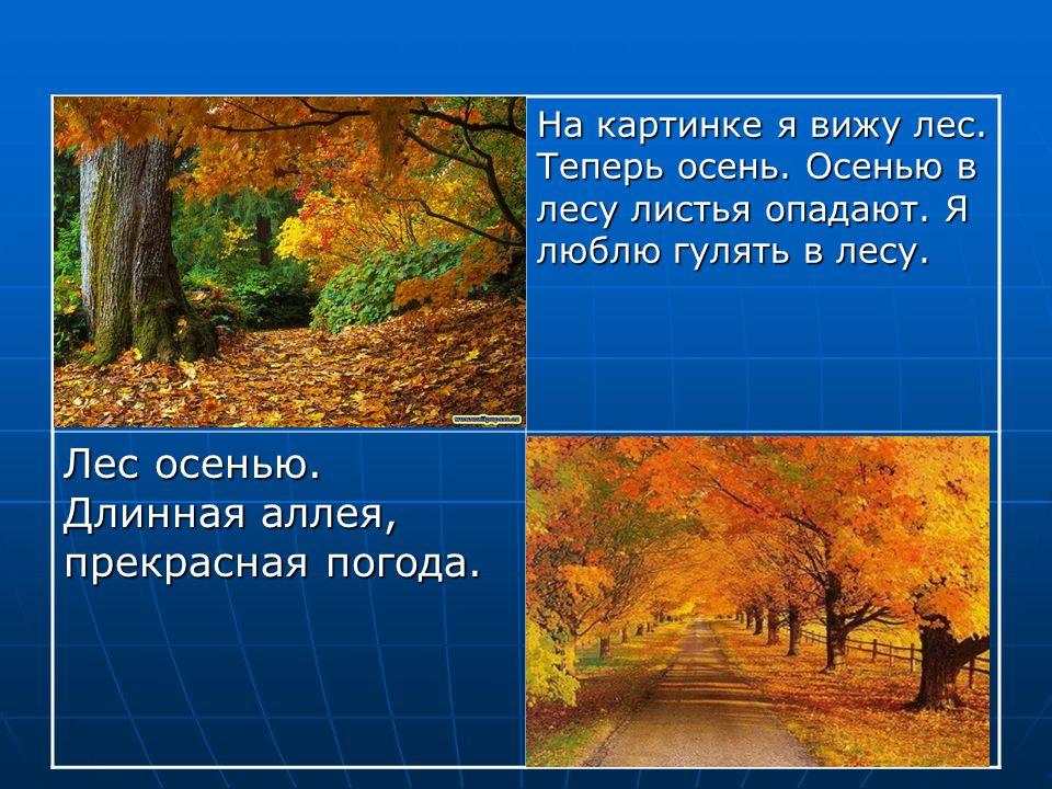 Лес осенью. Длинная аллея, прекрасная погода.