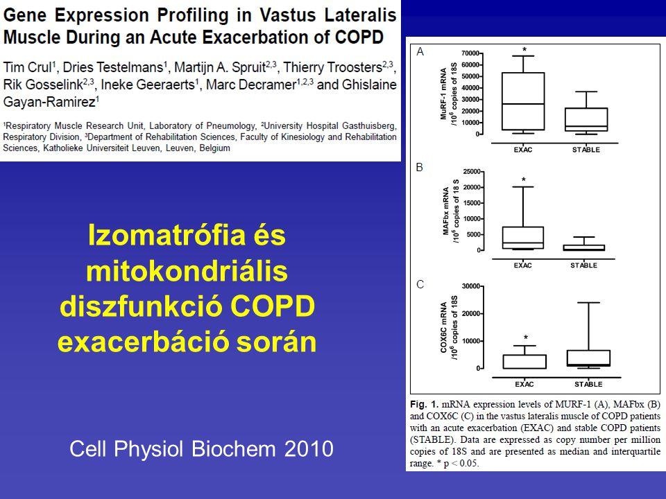 Izomatrófia és mitokondriális diszfunkció COPD exacerbáció során