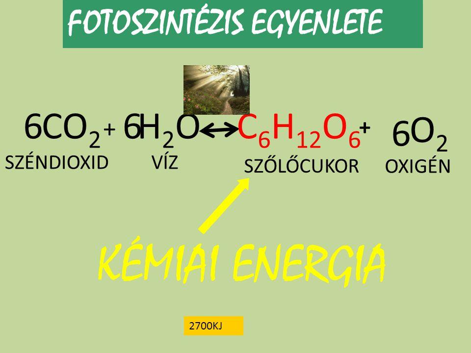 KÉMIAI ENERGIA 6 CO2 6 H2O C6H12O6 O2 6 FOTOSZINTÉZIS EGYENLETE + +