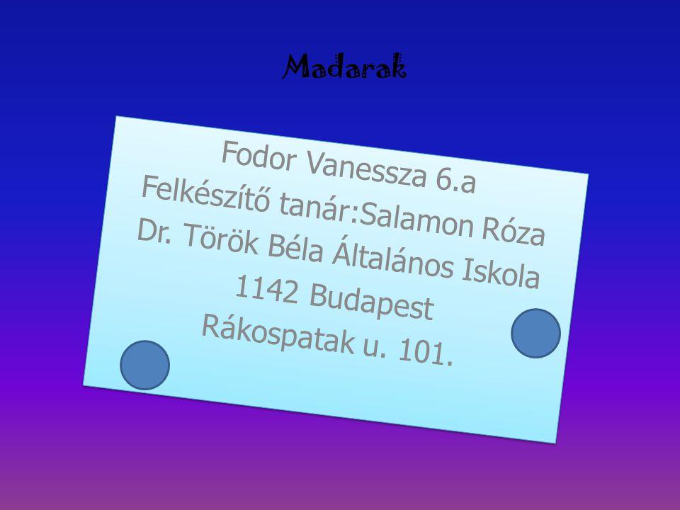 Felkészítő tanár:Salamon Róza Dr. Török Béla Általános Iskola