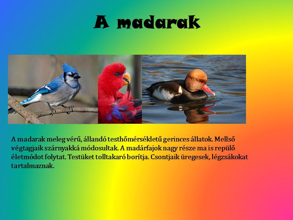 A madarak