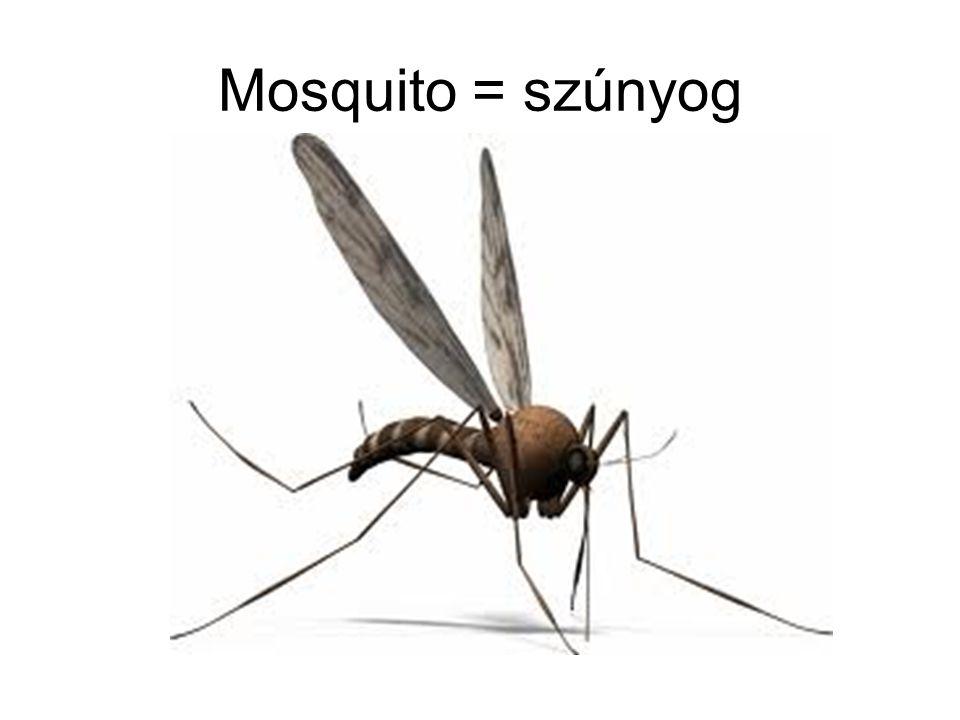 Mosquito = szúnyog