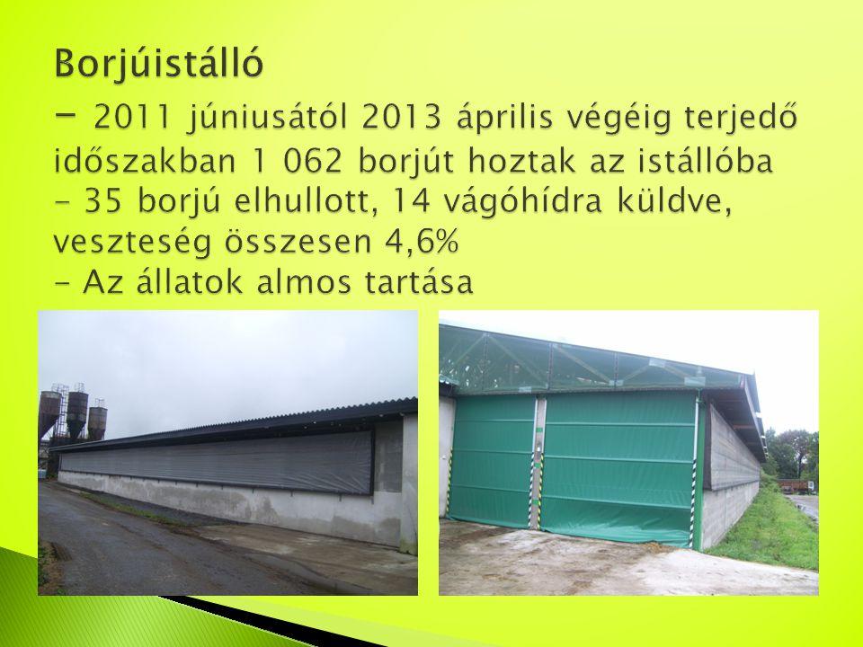 Borjúistálló - 2011 júniusától 2013 április végéig terjedő időszakban 1 062 borjút hoztak az istállóba - 35 borjú elhullott, 14 vágóhídra küldve, veszteség összesen 4,6% - Az állatok almos tartása