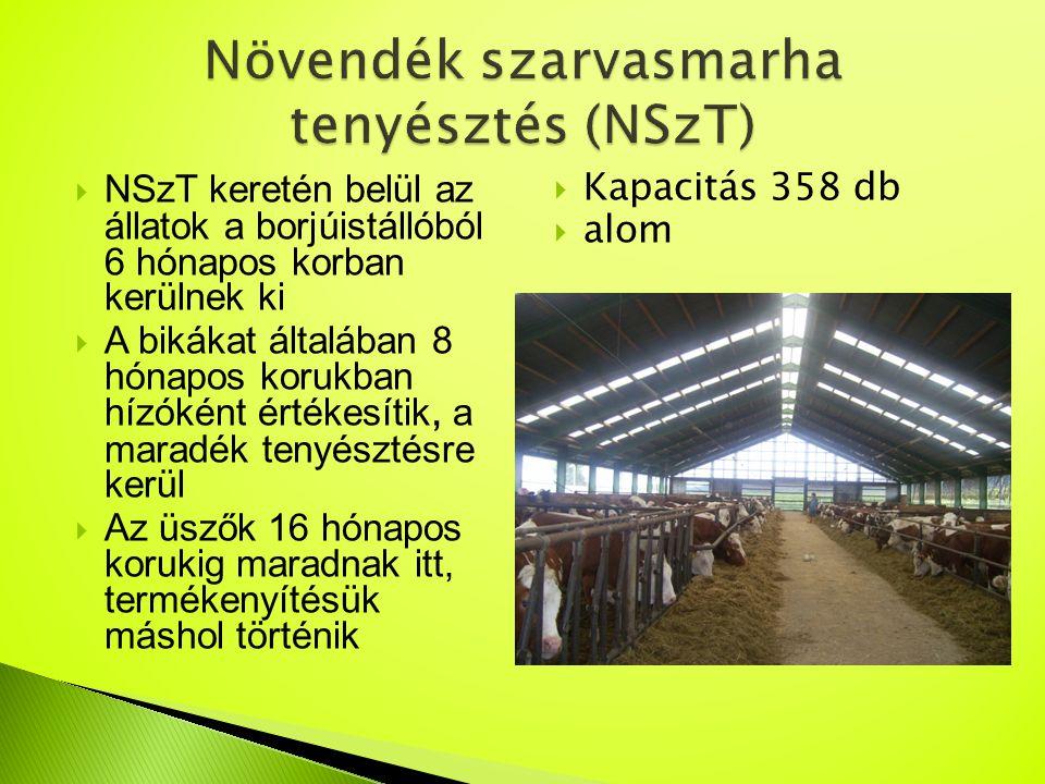 Növendék szarvasmarha tenyésztés (NSzT)