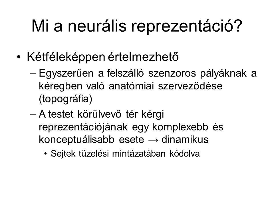 Mi a neurális reprezentáció