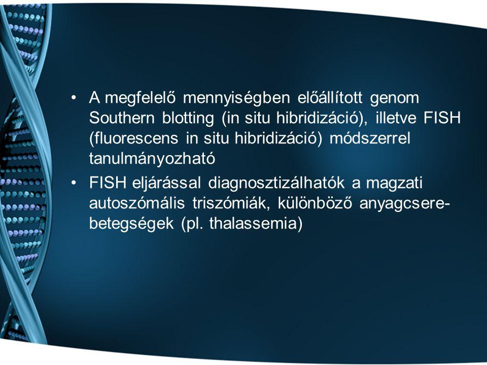 A megfelelő mennyiségben előállított genom Southern blotting (in situ hibridizáció), illetve FISH (fluorescens in situ hibridizáció) módszerrel tanulmányozható