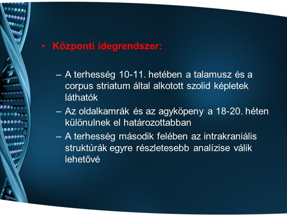 Központi idegrendszer: