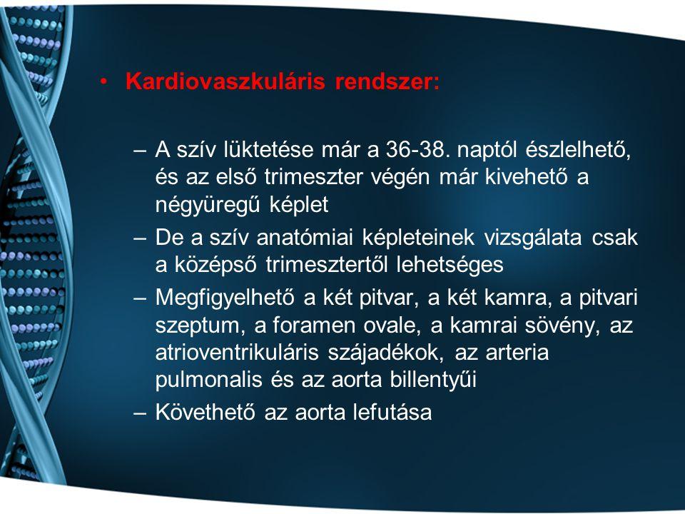 Kardiovaszkuláris rendszer: