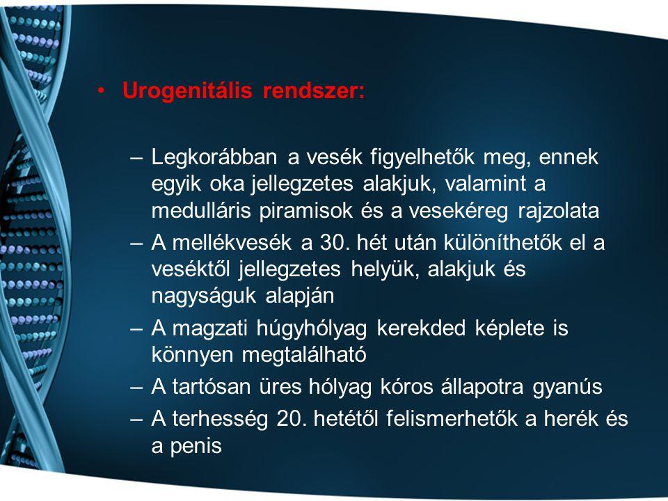 Urogenitális rendszer: