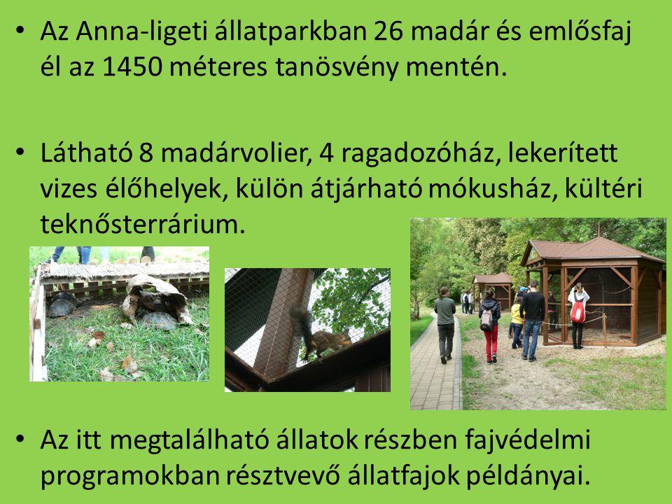 Az Anna-ligeti állatparkban 26 madár és emlősfaj él az 1450 méteres tanösvény mentén.
