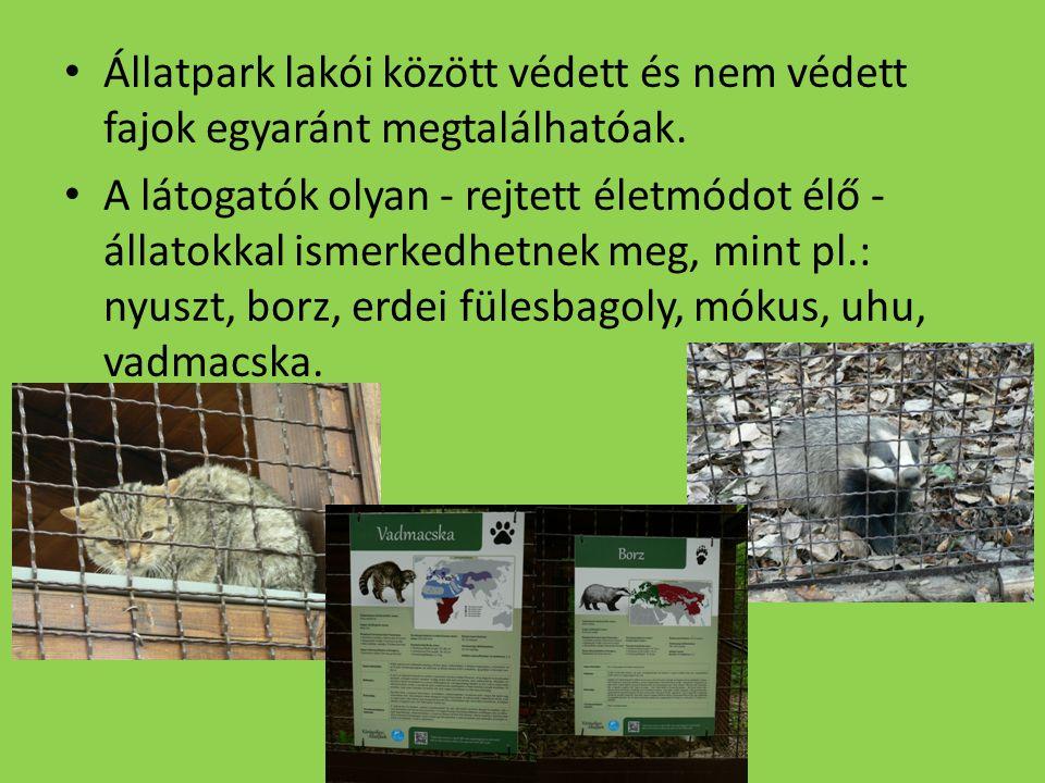 Állatpark lakói között védett és nem védett fajok egyaránt megtalálhatóak.