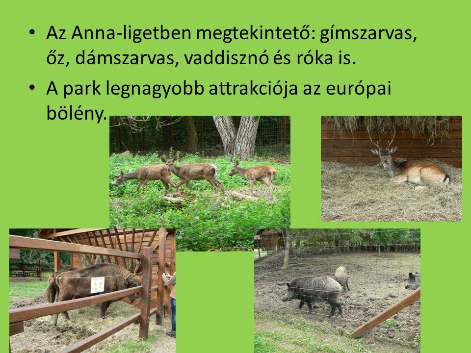 Az Anna-ligetben megtekintető: gímszarvas, őz, dámszarvas, vaddisznó és róka is.