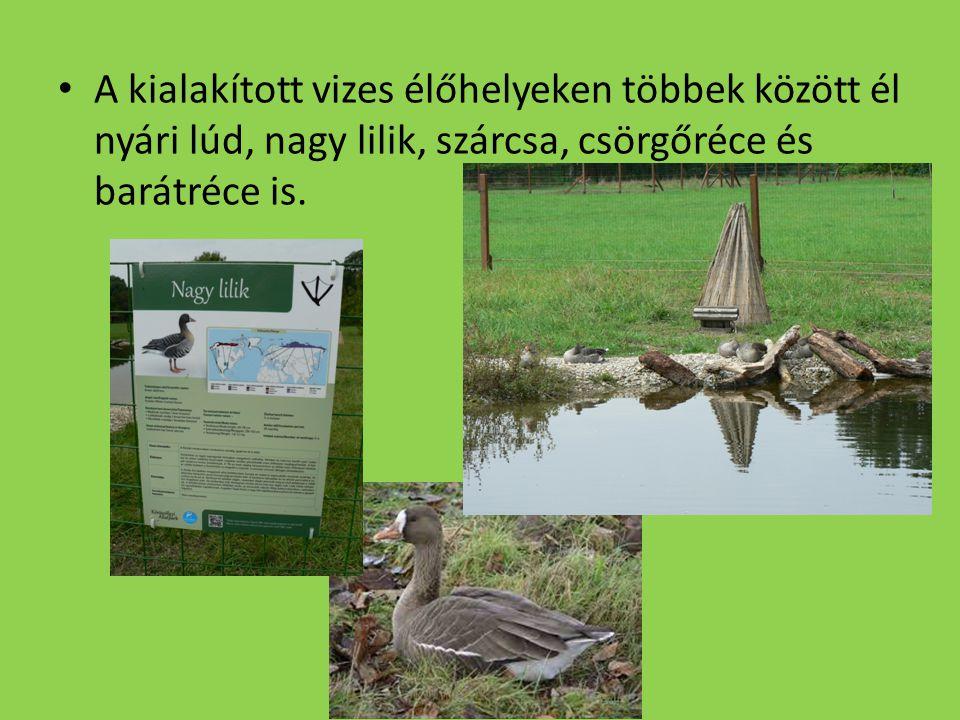 A kialakított vizes élőhelyeken többek között él nyári lúd, nagy lilik, szárcsa, csörgőréce és barátréce is.