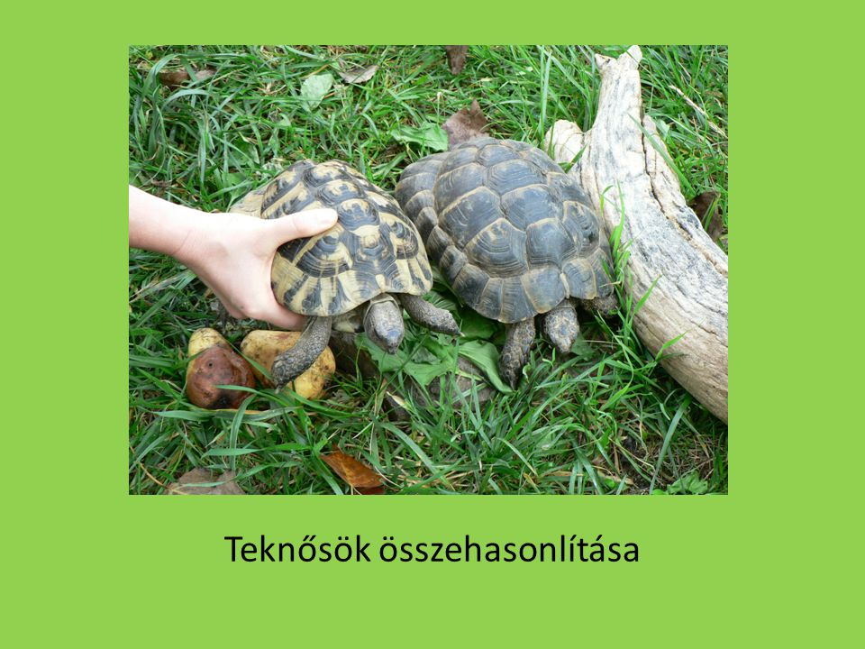 Teknősök összehasonlítása