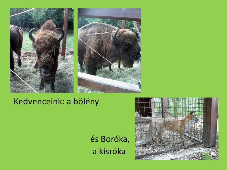 Kedvenceink: a bölény és Boróka, a kisróka