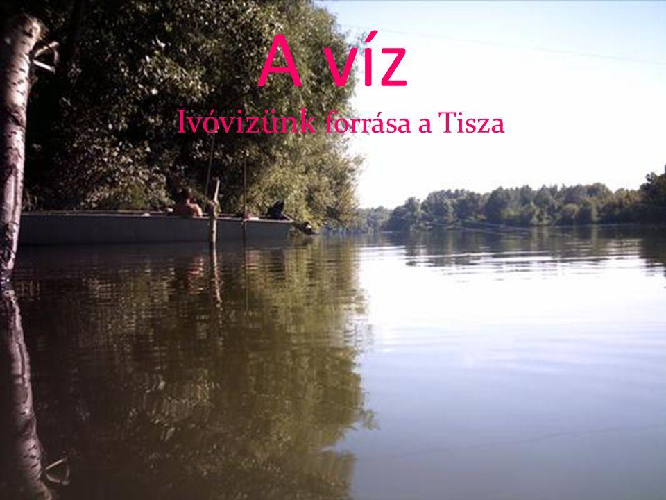 Ivóvizünk forrása a Tisza