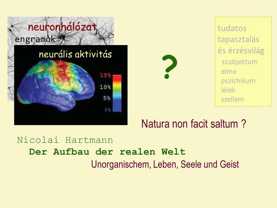 Natura non facit saltum neuronhálózat