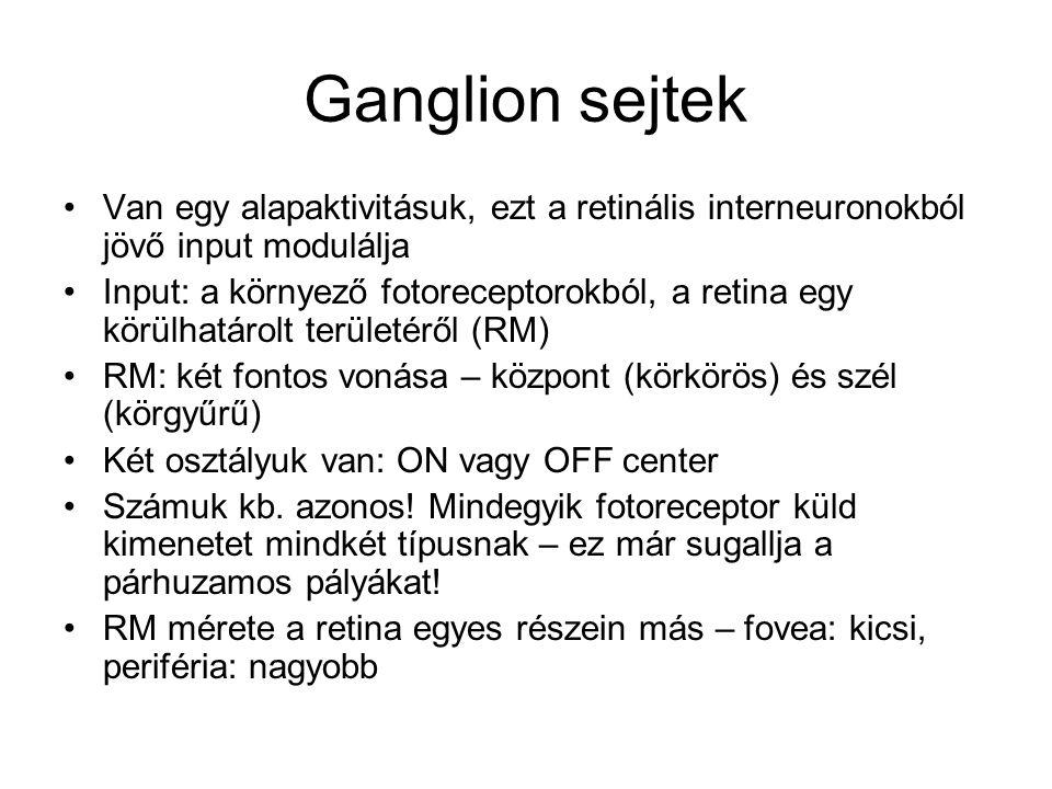 Ganglion sejtek Van egy alapaktivitásuk, ezt a retinális interneuronokból jövő input modulálja.