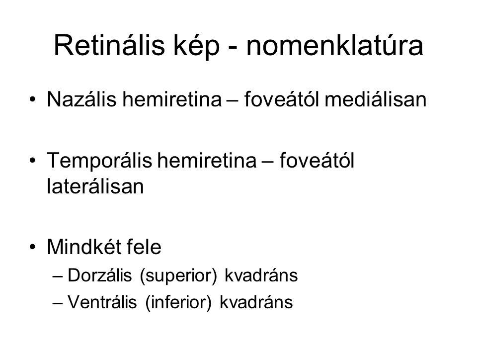 Retinális kép - nomenklatúra