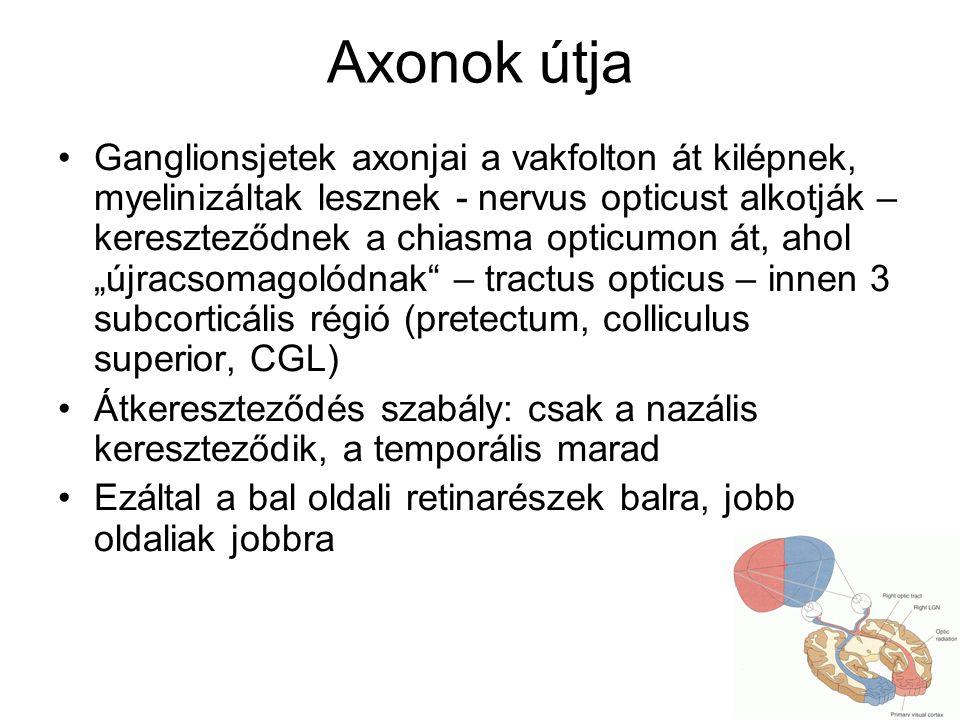Axonok útja