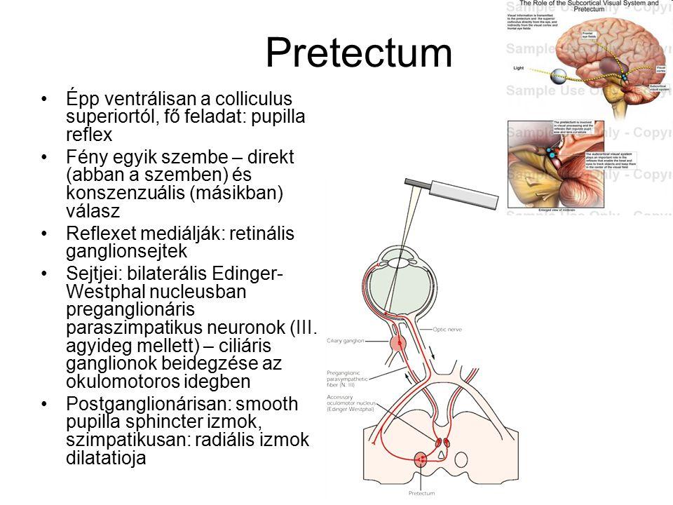 Pretectum Épp ventrálisan a colliculus superiortól, fő feladat: pupilla reflex.