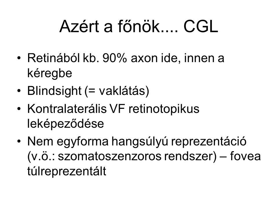 Azért a főnök.... CGL Retinából kb. 90% axon ide, innen a kéregbe
