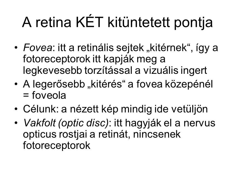 A retina KÉT kitüntetett pontja