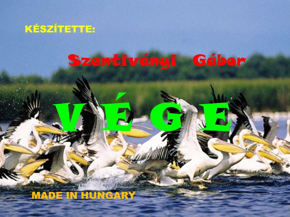 KÉSZÍTETTE: Szentiványi Gábor V É G E MADE IN HUNGARY