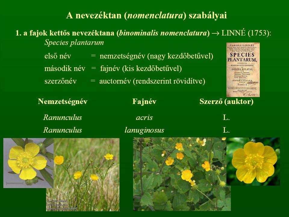 Nemzetségnév Fajnév Szerző (auktor) Ranunculus acris lanuginosus L.
