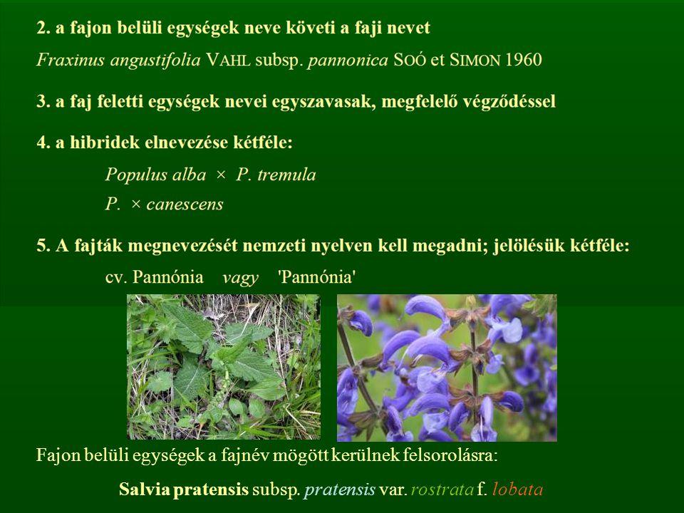 Salvia pratensis subsp. pratensis var. rostrata f. lobata