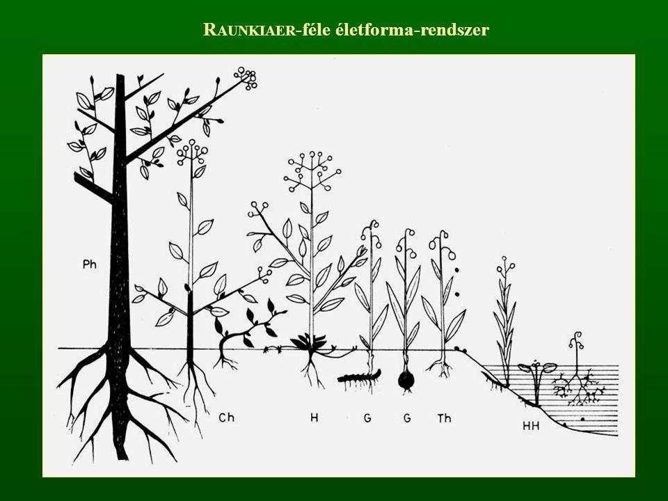 RAUNKIAER-féle életforma-rendszer