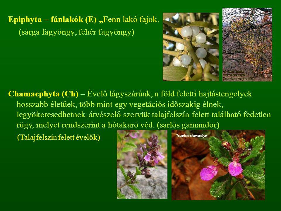 """Epiphyta – fánlakók (E) """"Fenn lakó fajok."""