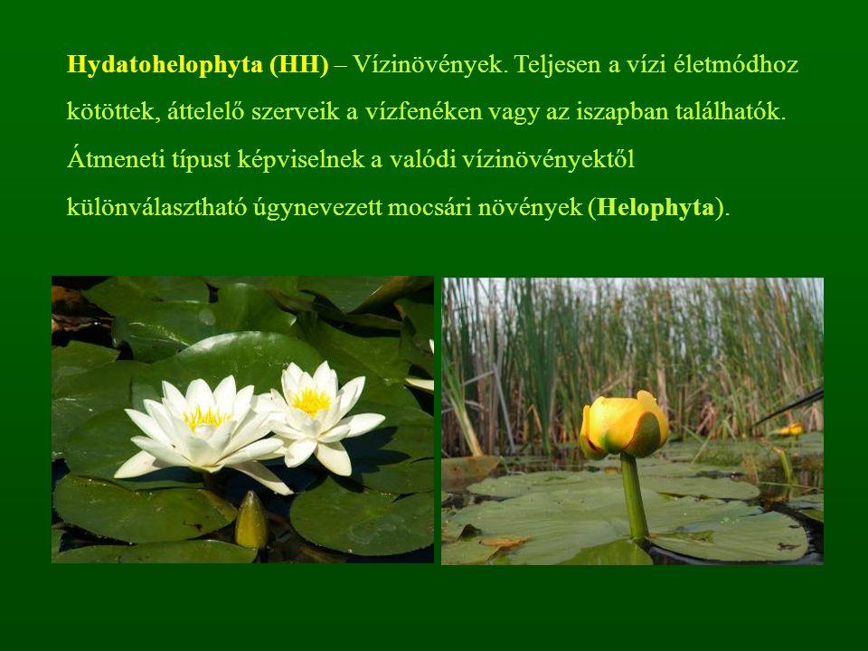 Hydatohelophyta (HH) – Vízinövények
